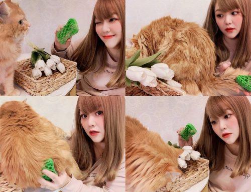 [寵物]  Pet+Me瑞士進口按摩梳 ♥ 毛物極選 給寵物最完美的呵護 ♥ 貓咪頂級SPA享受 專業寵物美容不求人 ♥ 貓毛打結問題OUT 長毛貓美容梳推薦 ⊂(・ω・*⊂)