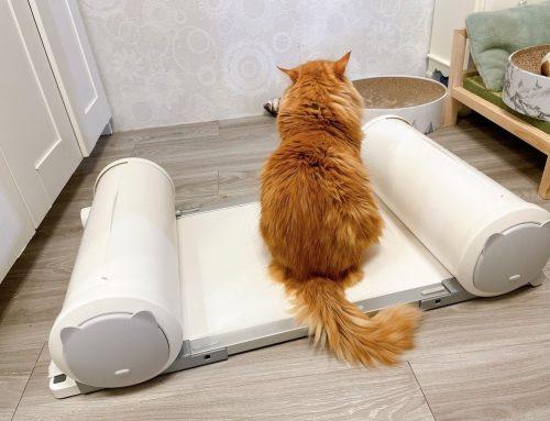 [寵物] POOPOUT 3秒清潔寵物便盆 ♥ 寵物家庭舒服氣息 質感生活現在就擁有 ♥ 貓咪亂尿尿交給POOPOUT滿屋貓尿味OUT ♥ 好用寵物鳥便盆推薦 ♫꒰・◡・๑꒱