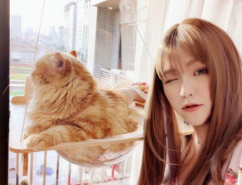 [寵物] Mysig 喵空漫步 ♥ 有貓就是最美的風景 Stayhome宅在家一起來吸貓 ♥ 幫貓咪打造舒適的理想生活 貓奴必須擁有療癒系貓跳台推薦 \(・ω・`)